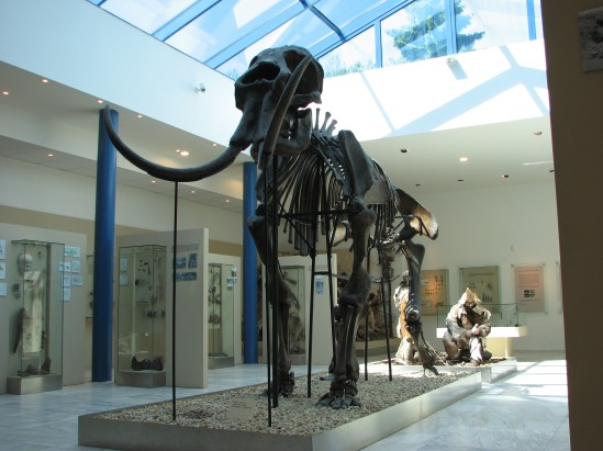Mammoth_skeleton