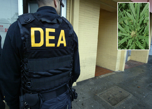 DEA Finally Admits Marijuana is Medicine