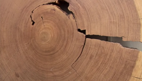 Tree Ring Study Put the Chill on Global Warming