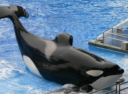 Bestselling Author Blows Lid Off SeaWorld