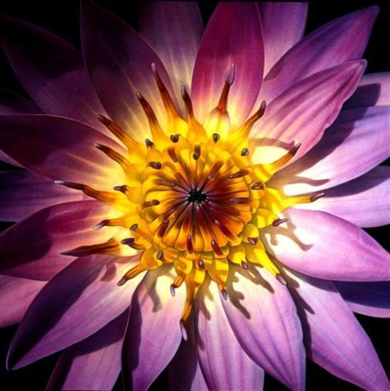 Plants Energy Through Quantum Entanglement