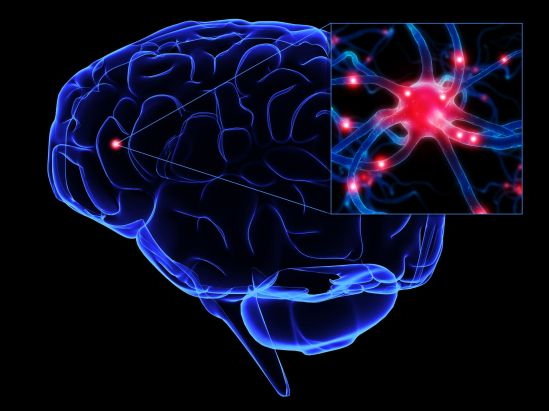 Brain Structure  Pain Sensitivity