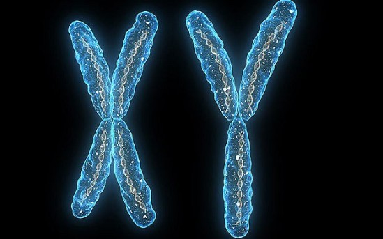 Stripped-Down Chromosome Retains Key Genes for Fertility