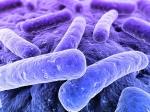 bacteria exploit proteins