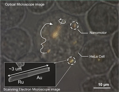 Tiny Nanomotors Successfully Placed Inside Live Human Cells For The First Time