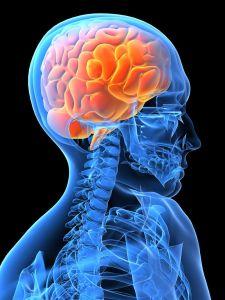 Brain study