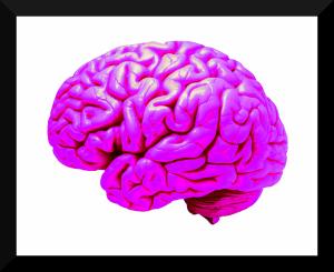 Protein Treats Alzheimer's Disease