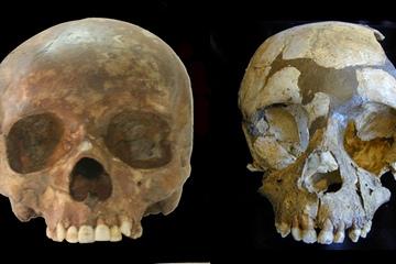 neanderthal-human-skulls