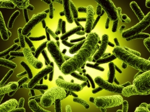 Bacteria to detect cancer