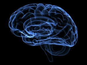 Scientists successfully grow human brain in lab